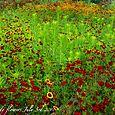 100703flowers