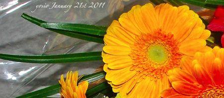 110121flower1