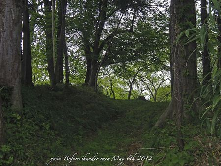 120506forest