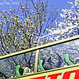 120408cherry_bus