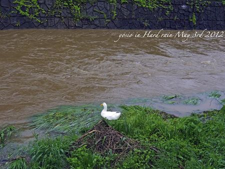 120503_river