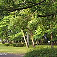 140531park