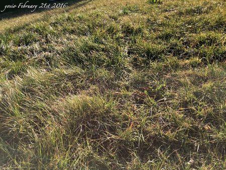 160221grass