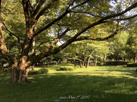 170501park